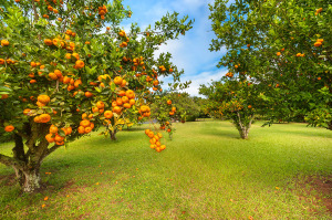 0916_FL-kareem-abdul-jabber-house-hawaii-orchard